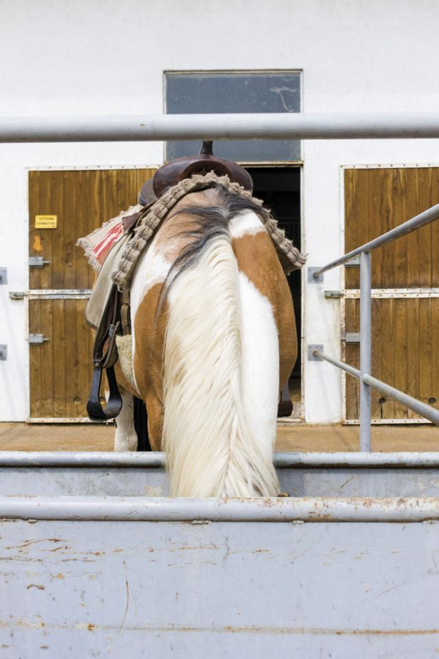 Cowboypony_136